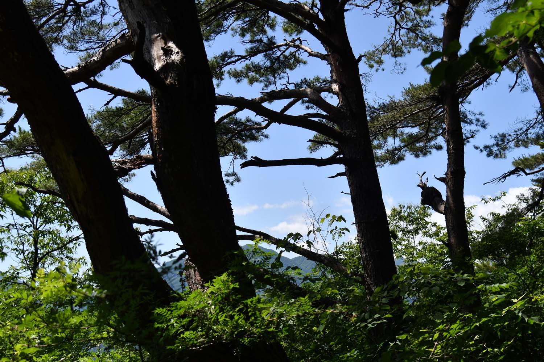 山頂は蝶の乱舞の向こうに富士山の絶景